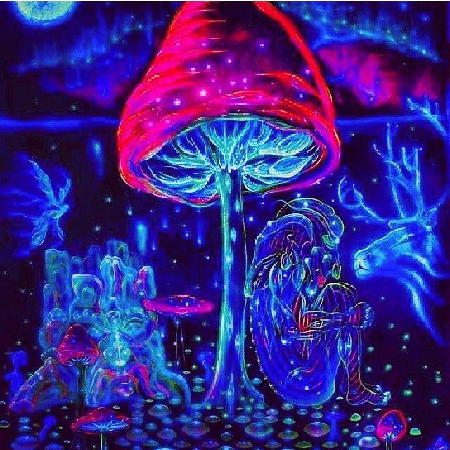 اثرات قارچ های جادویی در انسان