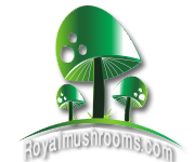 آشنایی با قارچ های سیلوسایبین