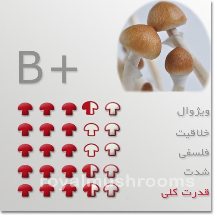 قارچ جادویی B+
