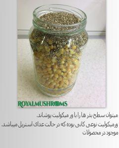 اسپان بذر قارچ جادویی