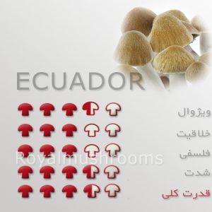قارچ جادویی اکوادور