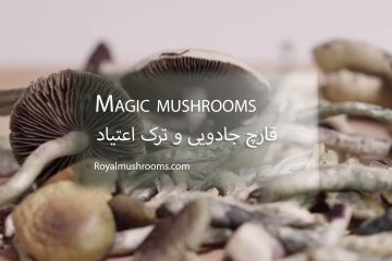 قارچ جادویی و ترک اعتیاد_رویال ماشرومز
